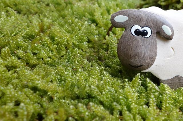 sheep-453812_640